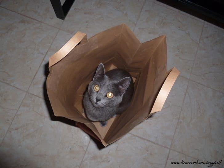 gatto_viaggi_portare