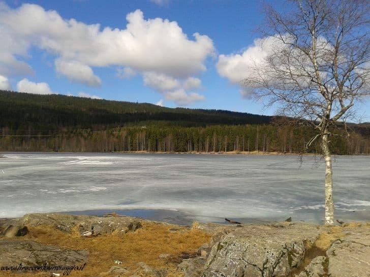 foresta_oslo_nordmarka_primavera