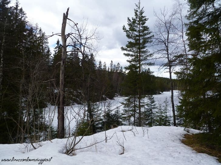 oslo_foresta_nordmarka_norvegia