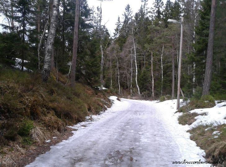 viaggio_oslo_foresta_nordmarka_norvegia