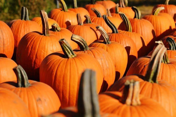 zucca_tradizioni_festa_halloween