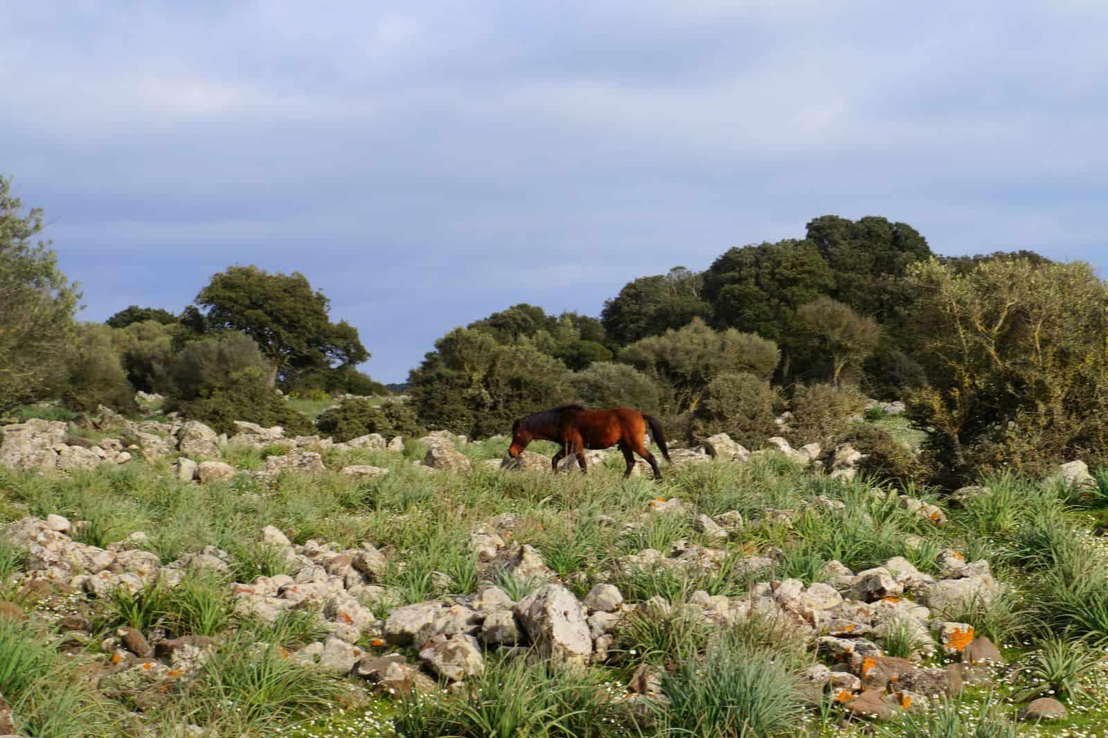 cavallini_giara_tuili