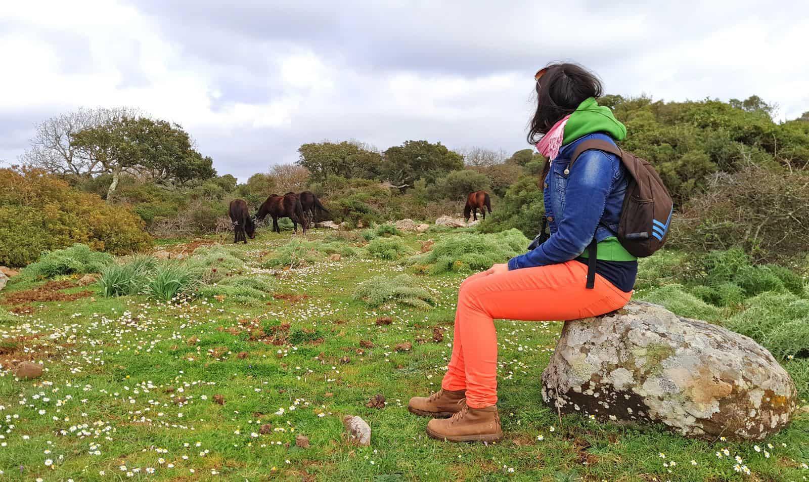 cavallini_giara_tuili_sardegna