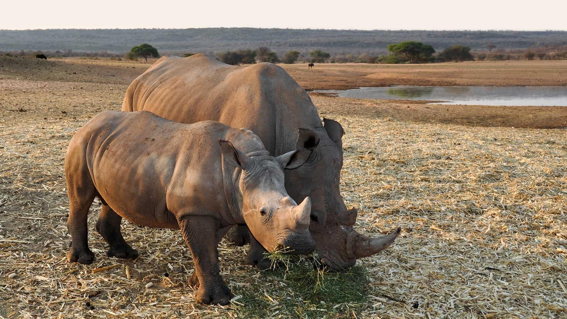 rinoceronte_namibia_safari_africa