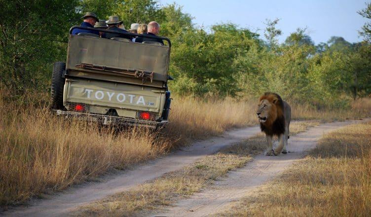 safari_namibia_cosa_sapere_prima_partire